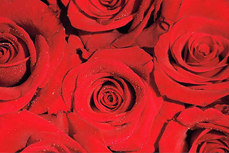 33GS-052 Wet Red Roses-2-