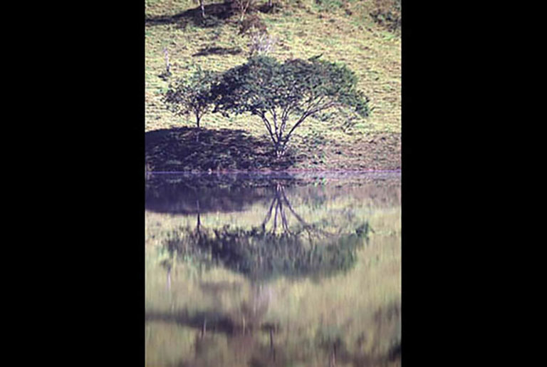 37GS-044 Tree reflection Nazare-BR-2-